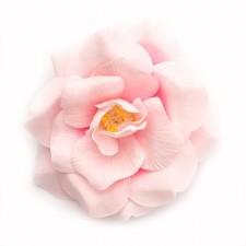 Wild rose Rosepink