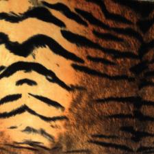 Velour Tiger