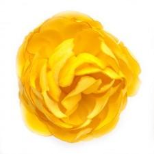Ranunkel Sommergold