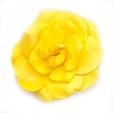 Wild rose Summergold