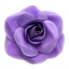 Mini rose Viola