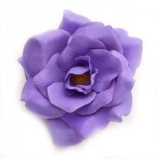 Wild rose Viola