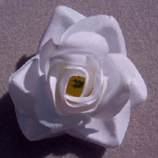 Mini rose White