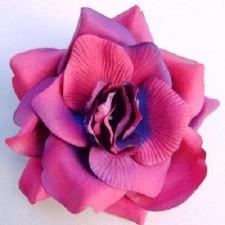 Wild rose Bordeaux