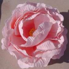 English rose Rosepink ---