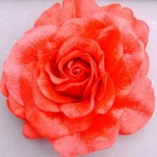 Velvet rose Tomato
